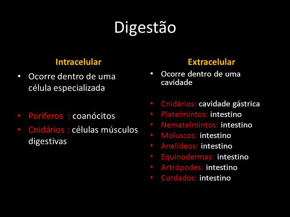 Digestão Intracelular • Ocorre dentro de uma célula especializada • Poríferos : coanócitos • Cnidários : células músculos digestivas Extracelular • Oc