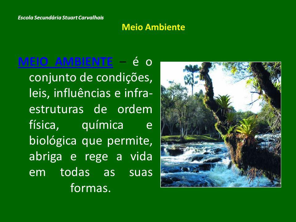 IMPACTO AMBIENTAL Escola Secundária Stuart Carvalhais Meio Ambiente