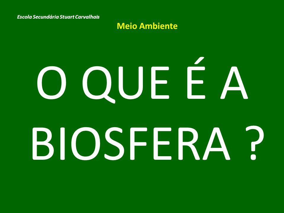 Biosfera é o conjunto de todos os ecossistemas da Terra.