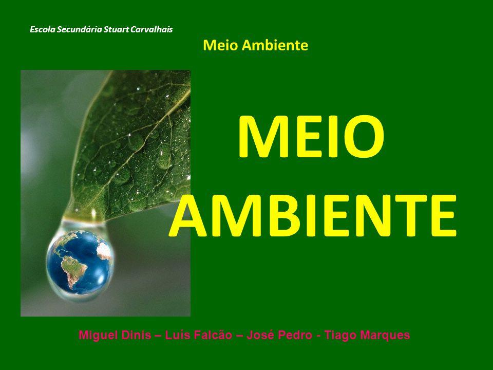 MEIO AMBIENTE Escola Secundária Stuart Carvalhais Meio Ambiente Miguel Dinis – Luís Falcão – José Pedro - Tiago Marques