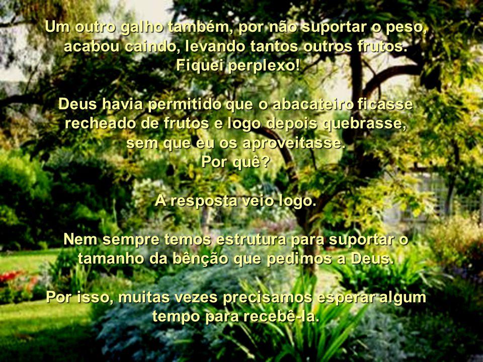 A lição do abacateiro Pe. Helder Havia no meu quintal um abacateiro que produzia pouquíssimos frutos. Por acreditar que uma árvore frutífera precisa s