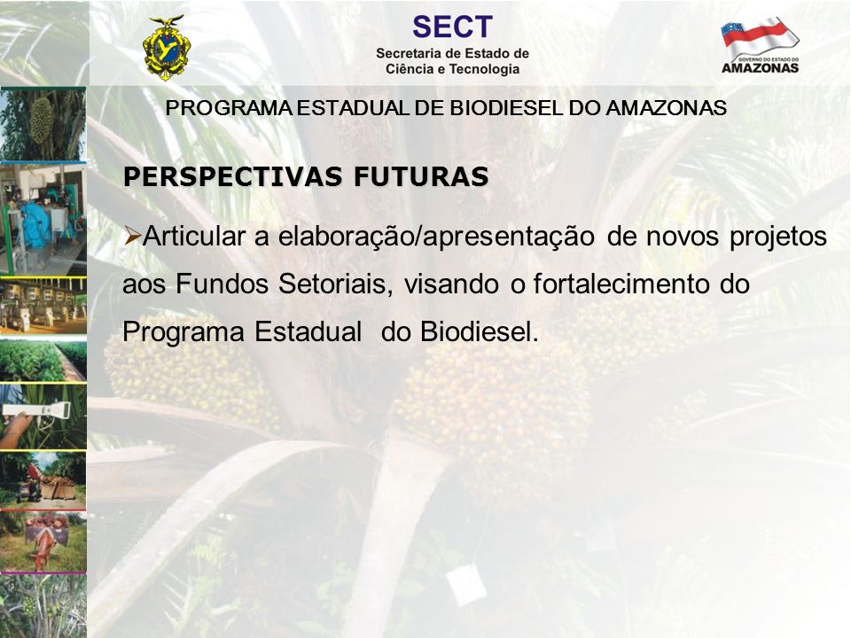 PROGRAMA ESTADUAL DE BIODIESEL DO AMAZONAS  Articular a elaboração/apresentação de novos projetos aos Fundos Setoriais, visando o fortalecimento do Programa Estadual do Biodiesel.