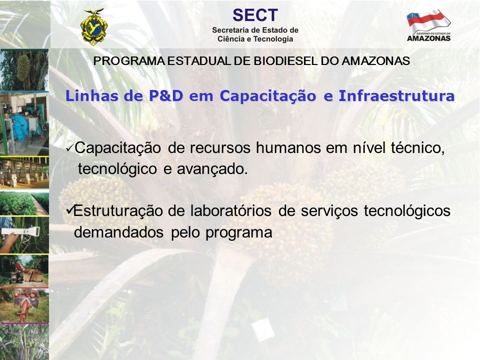 PROGRAMA ESTADUAL DE BIODIESEL DO AMAZONAS  Capacitação de recursos humanos em nível técnico, tecnológico e avançado.  Estruturação de laboratórios