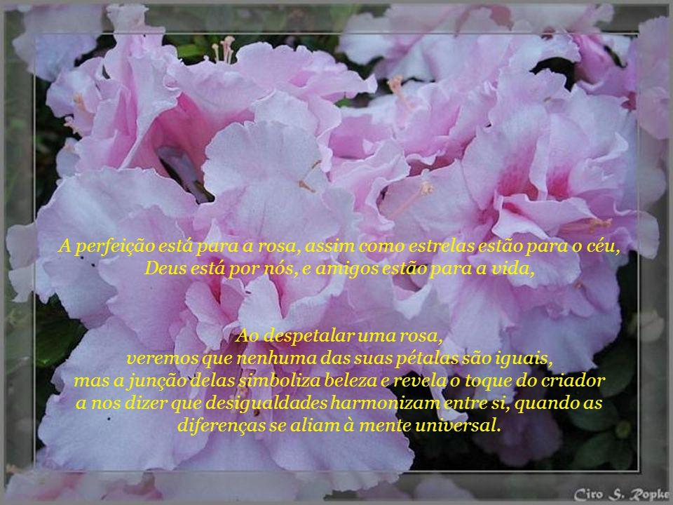 A perfeição está para a rosa, assim como estrelas estão para o céu, Deus está por nós, e amigos estão para a vida, Ao despetalar uma rosa, veremos que nenhuma das suas pétalas são iguais, mas a junção delas simboliza beleza e revela o toque do criador a nos dizer que desigualdades harmonizam entre si, quando as diferenças se aliam à mente universal.