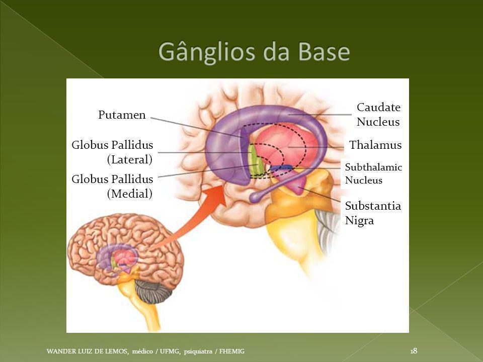 WANDER LUIZ DE LEMOS, médico / UFMG, psiquiatra / FHEMIG 18 Putamen Globus Pallidus (Lateral) Globus Pallidus (Medial) Caudate Nucleus Thalamus Subtha