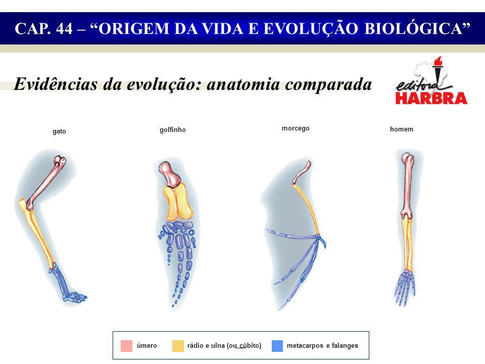 Evidências da evolução: anatomia comparada CAP.