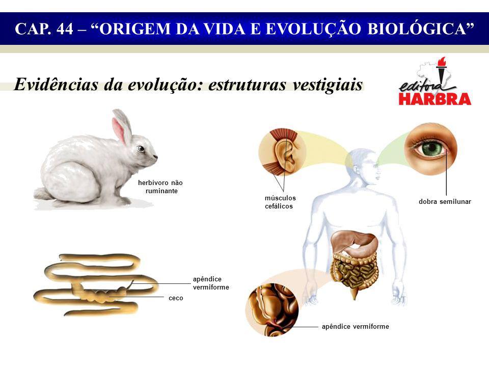 Evidências da evolução: estruturas vestigiais CAP.