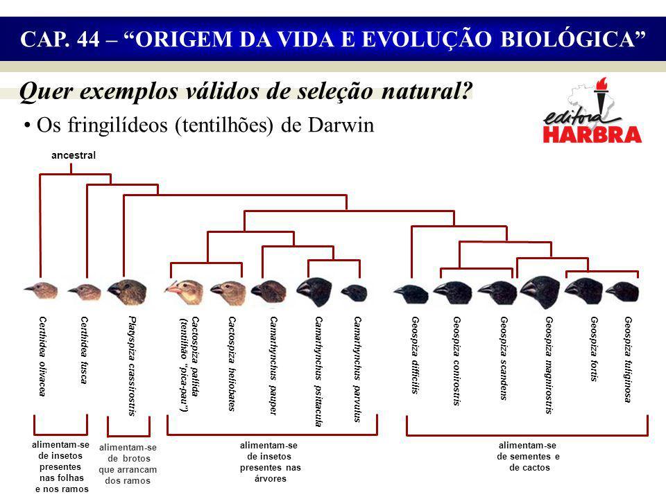 Quer exemplos válidos de seleção natural.Geospiza fuliginosa CAP.