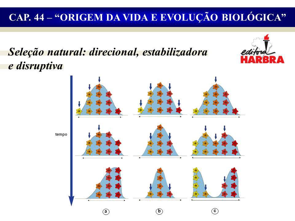 Seleção natural: direcional, estabilizadora e disruptiva CAP.