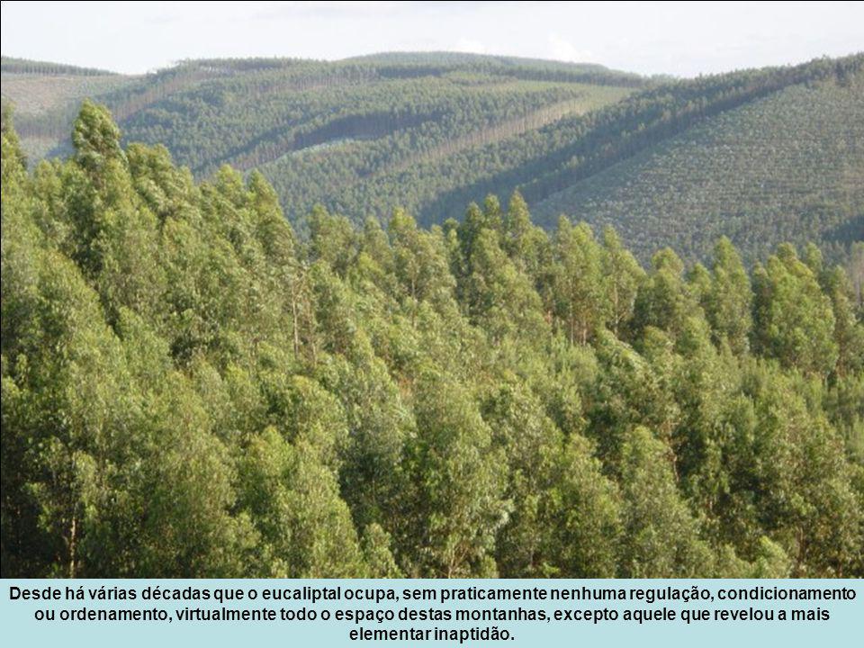 Desde há várias décadas que o eucaliptal ocupa, sem praticamente nenhuma regulação, condicionamento ou ordenamento, virtualmente todo o espaço destas montanhas, excepto aquele que revelou a mais elementar inaptidão.