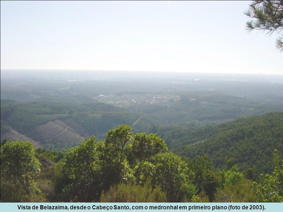 Vista de Belazaima, desde o Cabeço Santo, com o medronhal em primeiro plano (foto de 2003).
