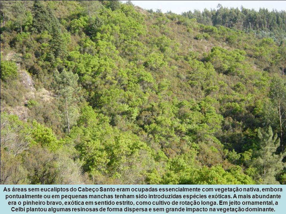 As áreas sem eucaliptos do Cabeço Santo eram ocupadas essencialmente com vegetação nativa, embora pontualmente ou em pequenas manchas tenham sido introduzidas espécies exóticas.