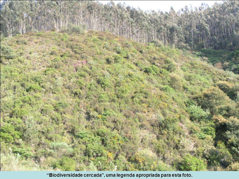 Sem objectivo e data conhecidos, foi introduzida a Acacia longifolia, que deu origem a pequenas manchas, mas que, antes do incêndio de 2005, se encontrava sobretudo com plantas dispersas por quase todo o medronhal.