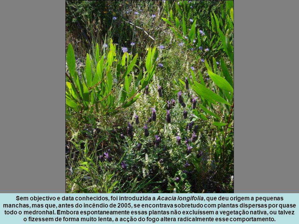 Onde a água corre, como aqui, onde começa a tomar forma o Ribeiro de Belazaima, a densidade e a diversidade da vegetação aumentam.