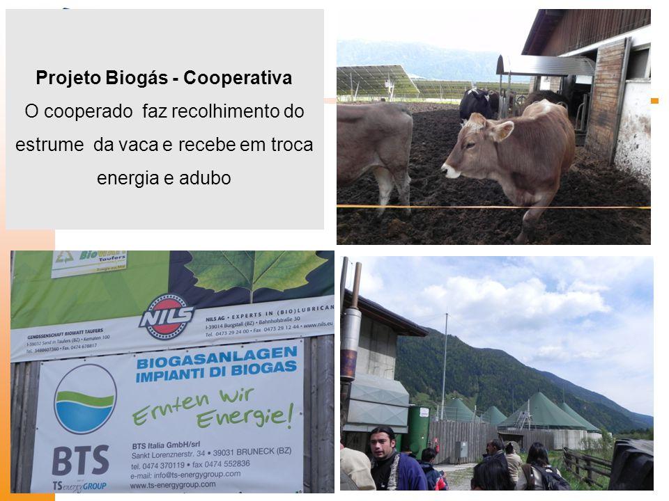 Projeto Biogás - Cooperativa O cooperado faz recolhimento do estrume da vaca e recebe em troca energia e adubo