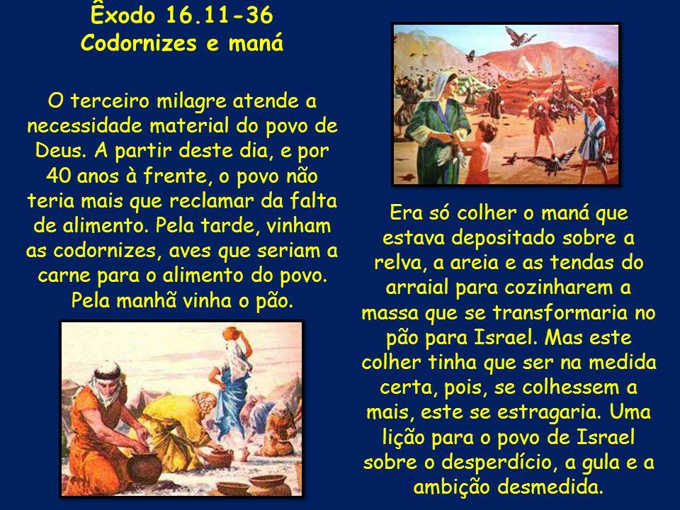 Êxodo 16.11-36 Codornizes e maná O terceiro milagre atende a necessidade material do povo de Deus. A partir deste dia, e por 40 anos à frente, o povo