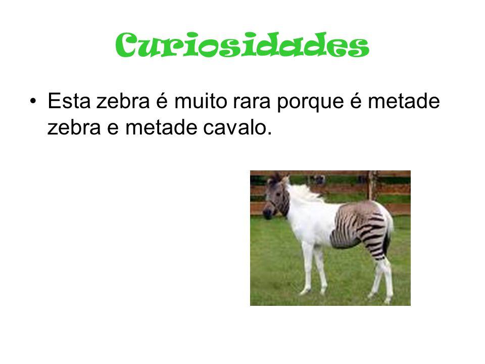 Curiosidades •Esta zebra é muito rara porque é metade zebra e metade cavalo.