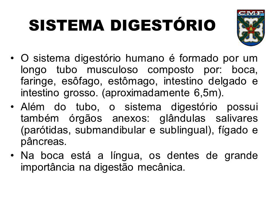 SISTEMA DIGESTÓRIO •O sistema digestório humano é formado por um longo tubo musculoso composto por: boca, faringe, esôfago, estômago, intestino delgad