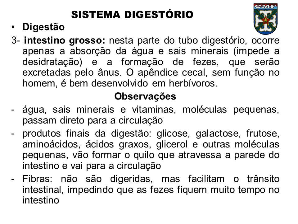 SISTEMA DIGESTÓRIO •Digestão 3- intestino grosso: nesta parte do tubo digestório, ocorre apenas a absorção da água e sais minerais (impede a desidrata