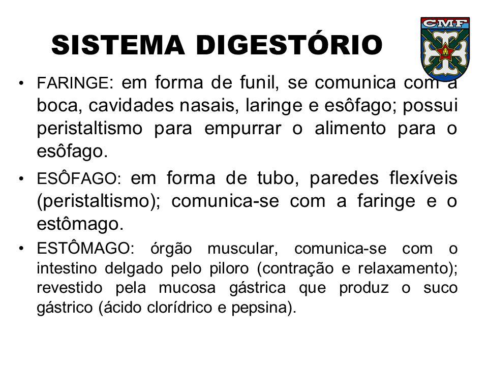 SISTEMA DIGESTÓRIO •INTESTINO DELGADO : onde ocorre a finalização da digestão; revestido pela mucosa intestinal que produz o suco entérico; composto por 3 partes: duodeno, jejuno e íleo.