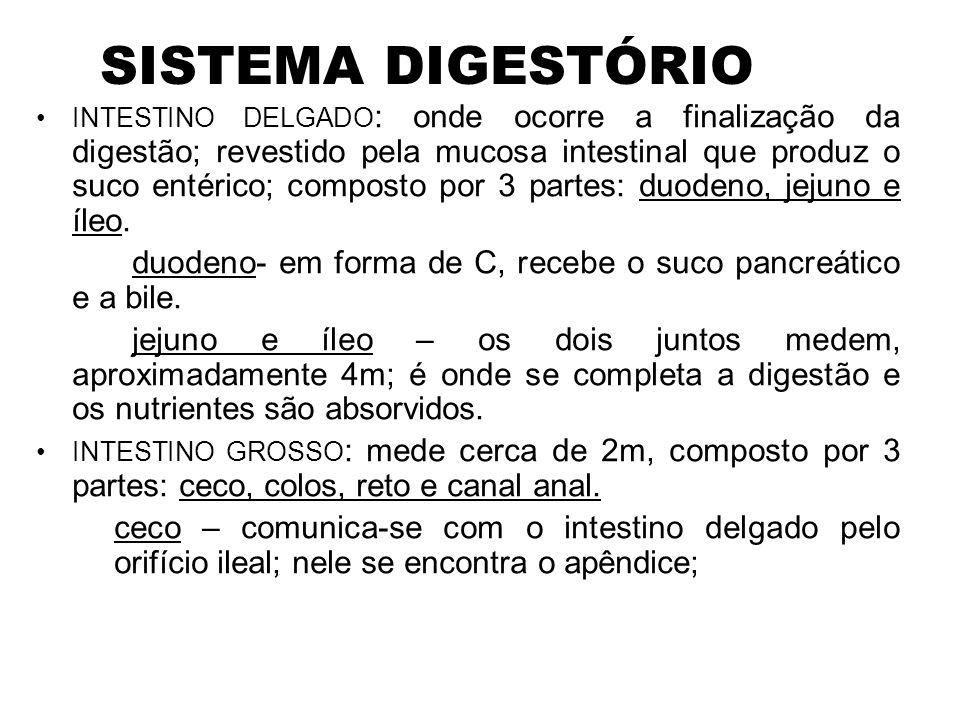 SISTEMA DIGESTÓRIO •INTESTINO DELGADO : onde ocorre a finalização da digestão; revestido pela mucosa intestinal que produz o suco entérico; composto p