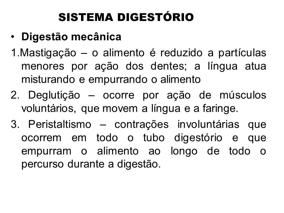 SISTEMA DIGESTÓRIO •Digestão mecânica 1.Mastigação – o alimento é reduzido a partículas menores por ação dos dentes; a língua atua misturando e empurr