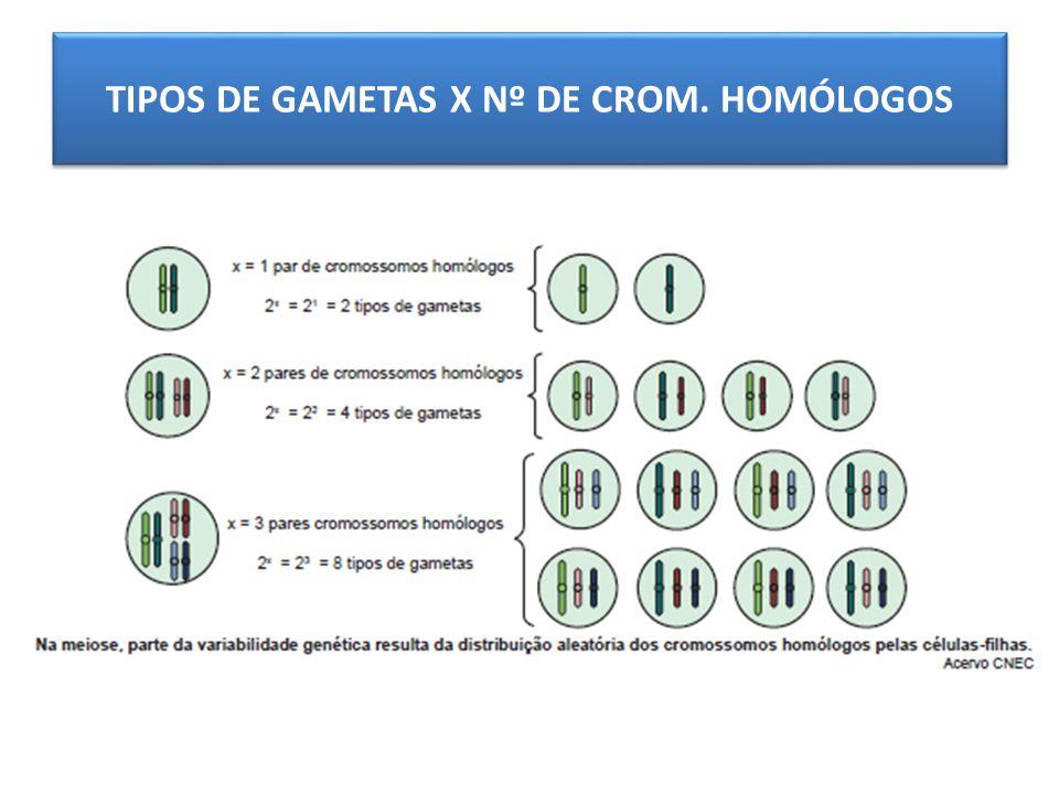 TIPOS DE GAMETAS X Nº DE CROM. HOMÓLOGOS