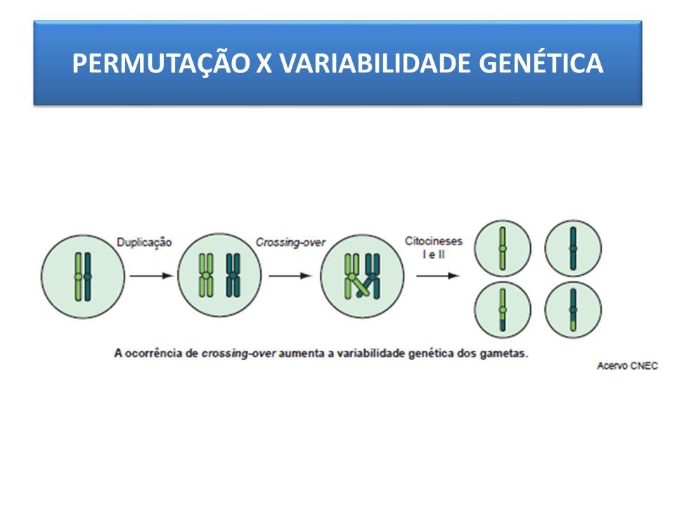 PERMUTAÇÃO X VARIABILIDADE GENÉTICA