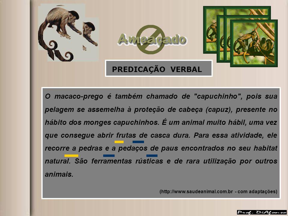 O macaco-prego é também chamado de capuchinho , pois sua pelagem se assemelha à proteção de cabeça (capuz), presente no hábito dos monges capuchinhos.