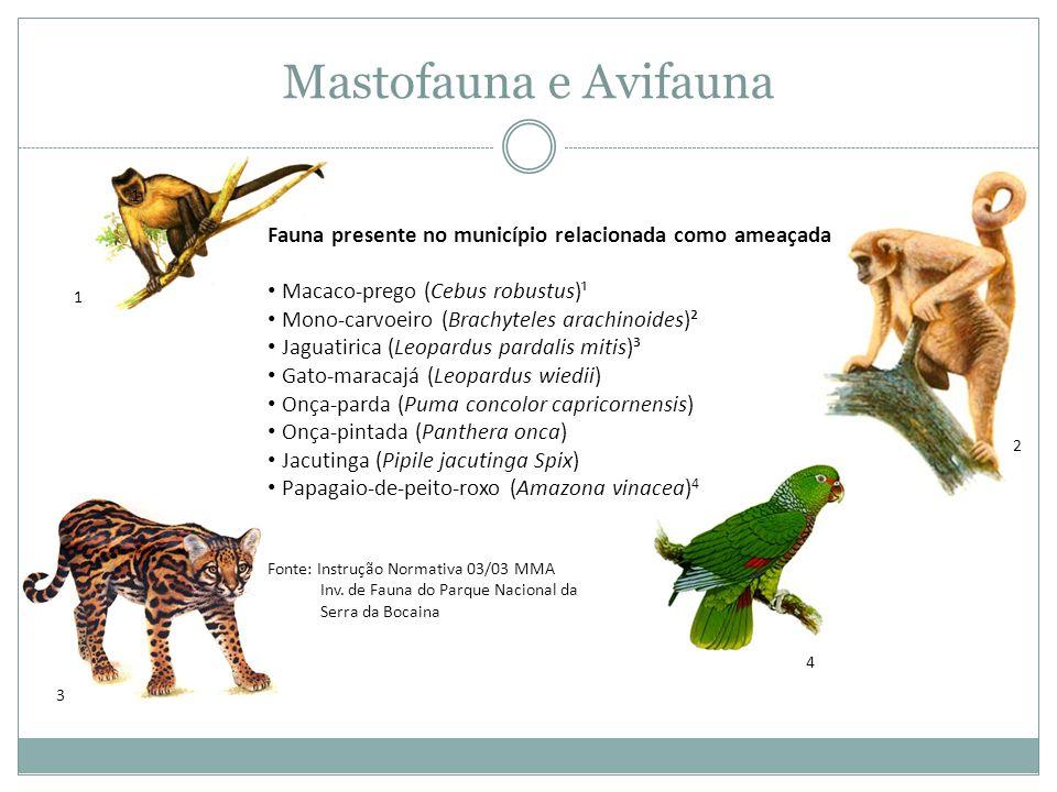 Mastofauna e Avifauna Fauna presente no município relacionada como ameaçada • Macaco-prego (Cebus robustus)¹ • Mono-carvoeiro (Brachyteles arachinoides)² • Jaguatirica (Leopardus pardalis mitis)³ • Gato-maracajá (Leopardus wiedii) • Onça-parda (Puma concolor capricornensis) • Onça-pintada (Panthera onca) • Jacutinga (Pipile jacutinga Spix) • Papagaio-de-peito-roxo (Amazona vinacea) 4 Fonte: Instrução Normativa 03/03 MMA Inv.