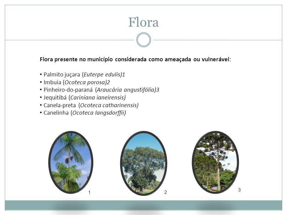 Flora Flora presente no município considerada como ameaçada ou vulnerável: • Palmito juçara (Euterpe edulis)1 • Imbuia (Ocoteca porosa)2 • Pinheiro-do-paraná (Araucária angustifólia)3 • Jequitibá (Cariniana ianeirensis) • Canela-preta (Ocoteca catharinensis) • Canelinha (Ocoteca langsdorffii) 12 3