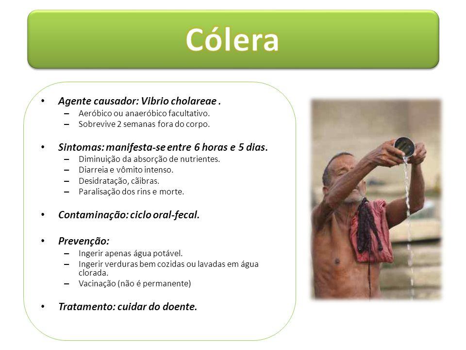 • Agente causador: Vibrio cholareae. – Aeróbico ou anaeróbico facultativo. – Sobrevive 2 semanas fora do corpo. • Sintomas: manifesta-se entre 6 horas