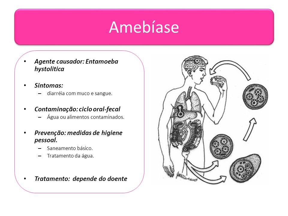 Amebíase • Agente causador: Entamoeba hystolitica • Sintomas: – diarréia com muco e sangue. • Contaminação: ciclo oral-fecal – Água ou alimentos conta
