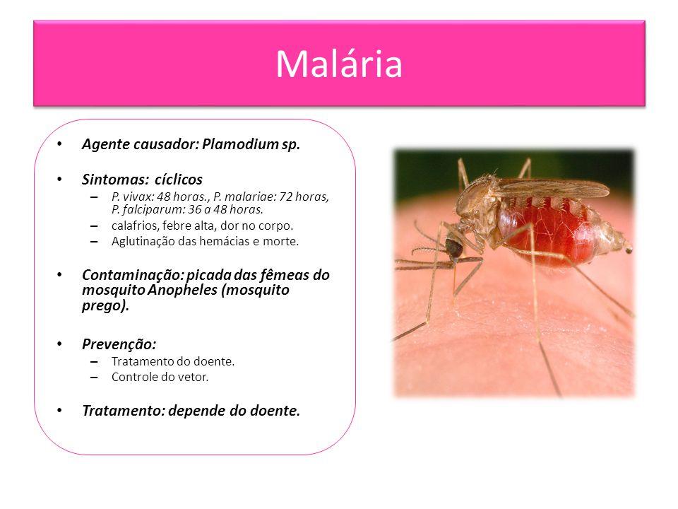 Malária • Agente causador: Plamodium sp. • Sintomas: cíclicos – P. vivax: 48 horas., P. malariae: 72 horas, P. falciparum: 36 a 48 horas. – calafrios,