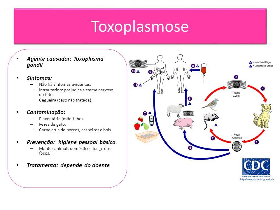 Toxoplasmose • Agente causador: Toxoplasma gondii • Sintomas: – Não há sintomas evidentes. – Intrauterino: prejudica sistema nervoso do feto. – Ceguei