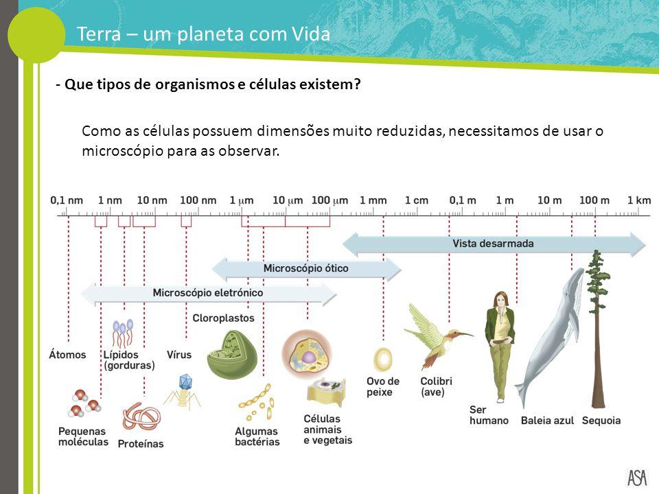 - Que tipos de organismos e células existem? Como as células possuem dimensões muito reduzidas, necessitamos de usar o microscópio para as observar. T