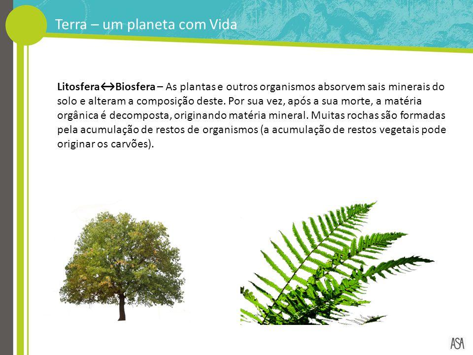 Terra – um planeta com Vida Litosfera↔Biosfera – As plantas e outros organismos absorvem sais minerais do solo e alteram a composição deste. Por sua v