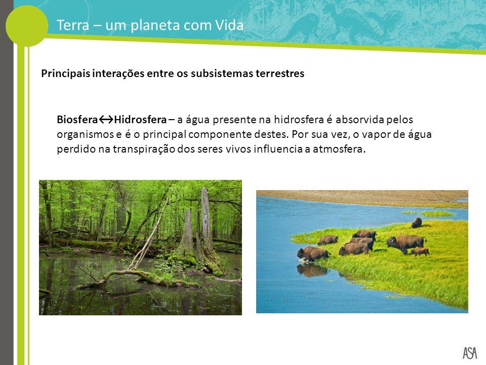Terra – um planeta com Vida Biosfera↔Hidrosfera – a água presente na hidrosfera é absorvida pelos organismos e é o principal componente destes. Por su