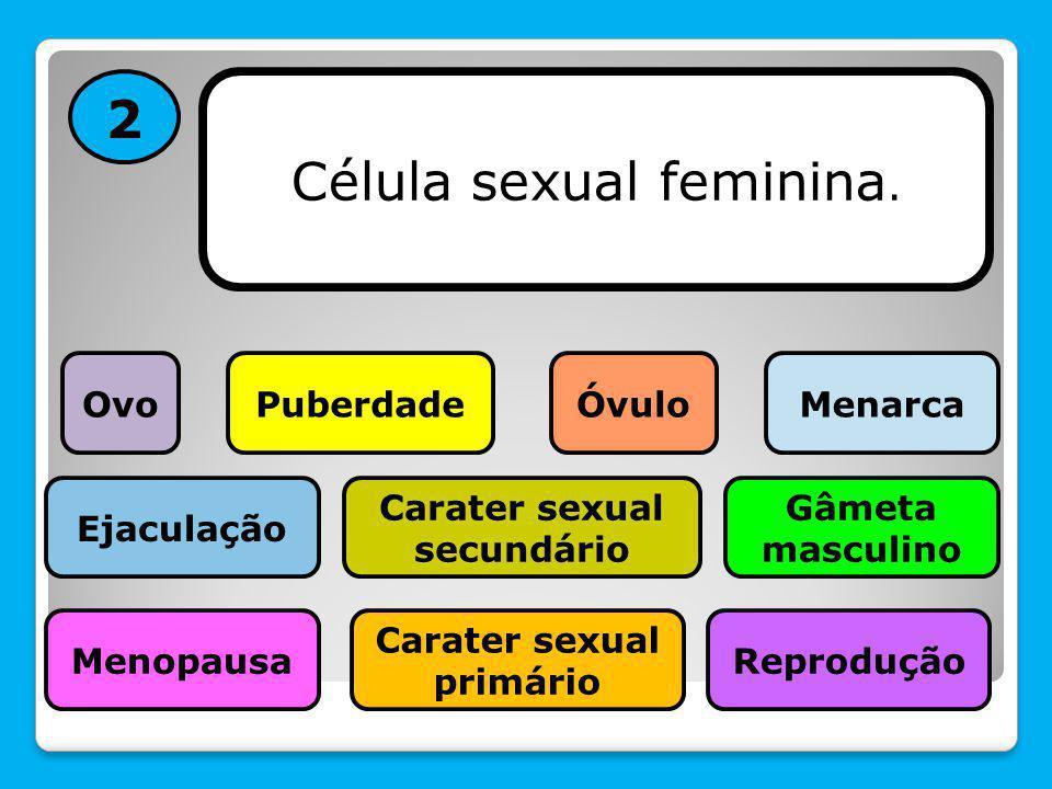2 Célula sexual feminina. Menopausa Gâmeta masculino PuberdadeÓvulo Carater sexual primário Reprodução Carater sexual secundário Menarca Ejaculação Ov