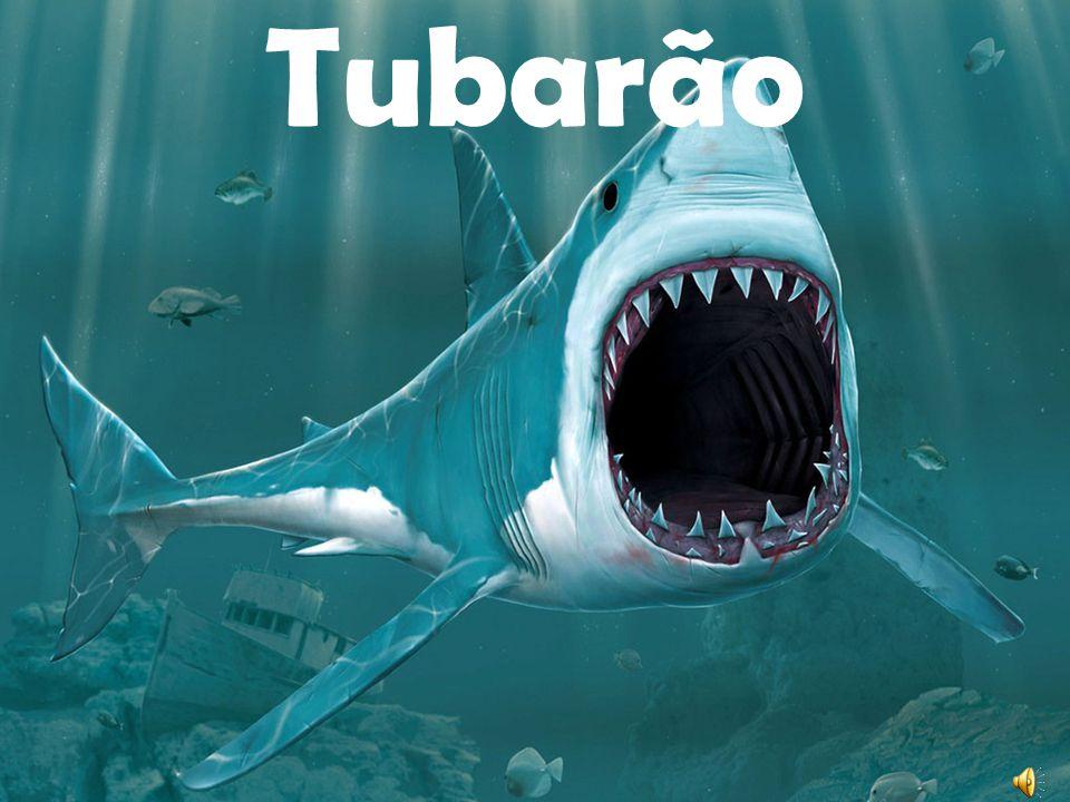 Tubarão Martelo O tubarão-martelo (Sphyrna spp.) é um gênero de tubarão, característico pelas projecções existentes em ambos os lados da cabeça, onde se localizam os olhos e as narinas.