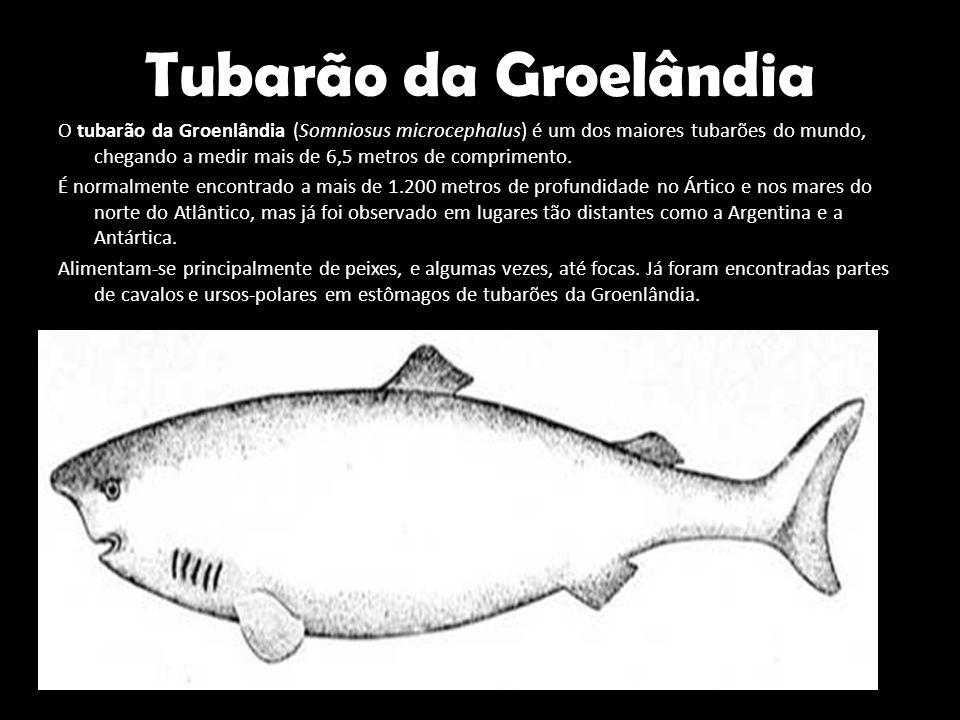 Tubarão da Groelândia O tubarão da Groenlândia (Somniosus microcephalus) é um dos maiores tubarões do mundo, chegando a medir mais de 6,5 metros de co