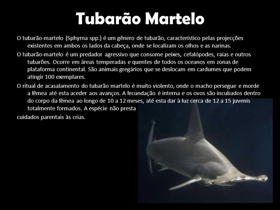 Tubarão Martelo O tubarão-martelo (Sphyrna spp.) é um gênero de tubarão, característico pelas projecções existentes em ambos os lados da cabeça, onde