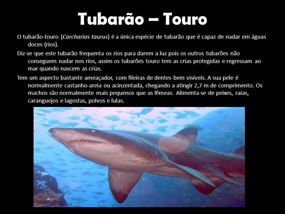 Tubarão – Touro O tubarão-touro (Carcharias taurus) é a única espécie de tubarão que é capaz de nadar em águas doces (rios). Diz-se que este tubarão f