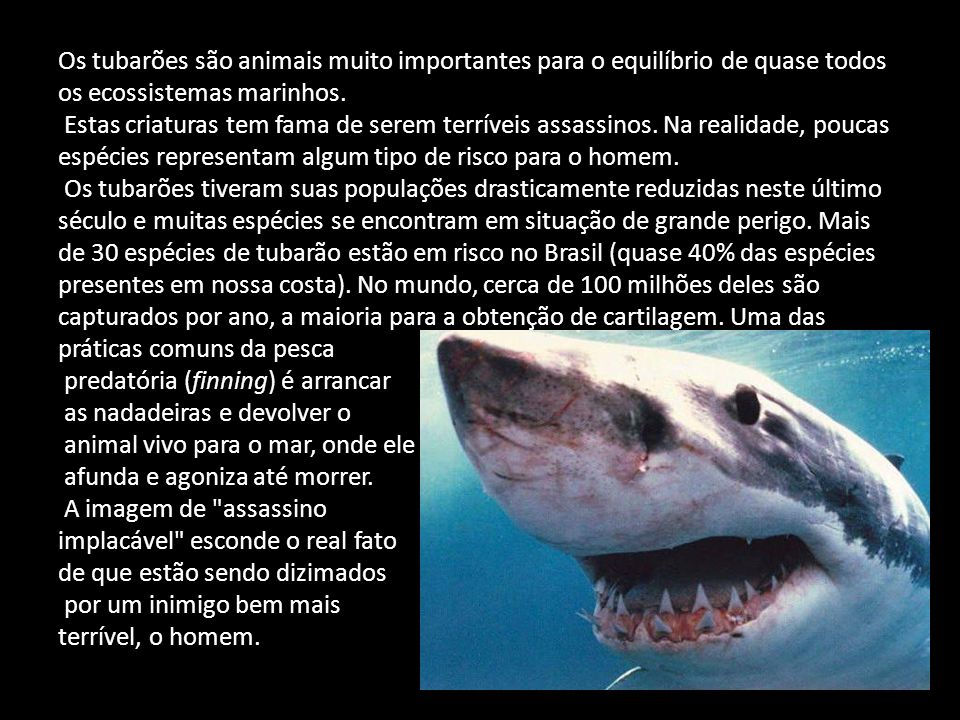 Os tubarões são animais muito importantes para o equilíbrio de quase todos os ecossistemas marinhos. Estas criaturas tem fama de serem terríveis assas