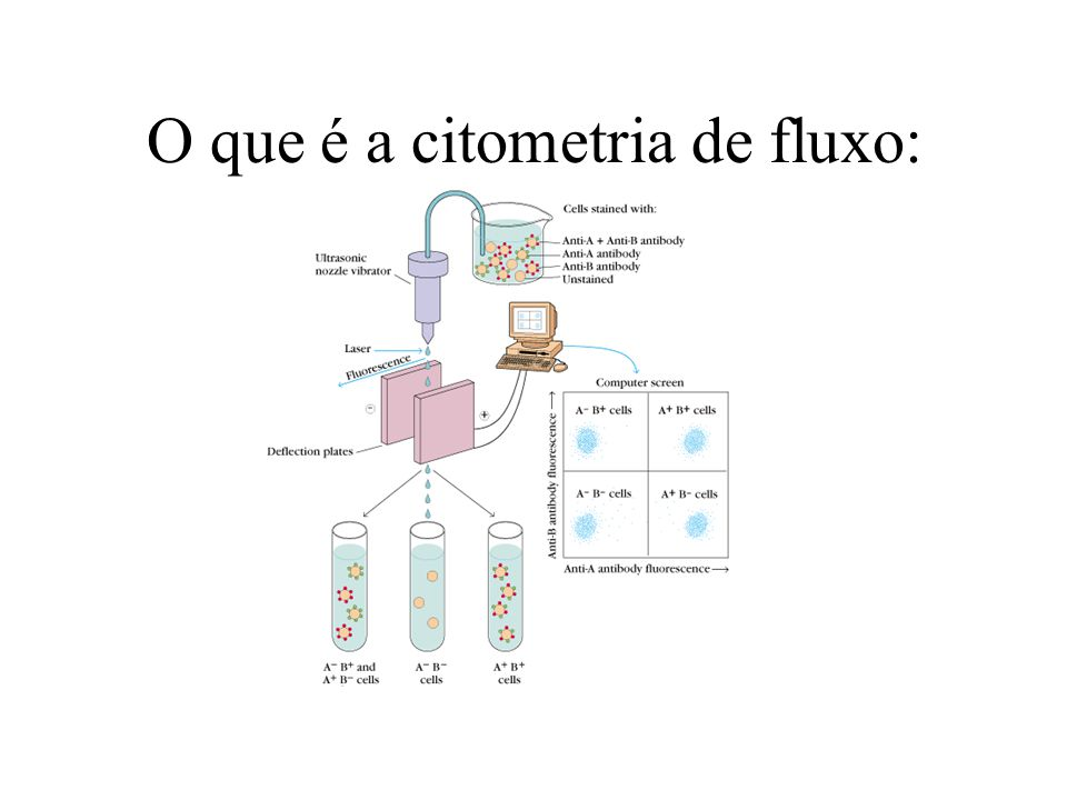Marcadores fluorescentes Fluorescein (FITC) 400 nm600 nm700 nm Wavelength 500 nm Excitation Emission
