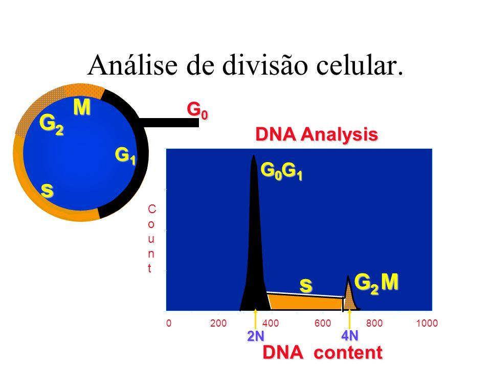 Análise de divisão celular. G2G2G2G2 M G0G0G0G0 G1G1G1G1 s 0 200 400 600 8001000 G0G0G0G0 G1G1G1G1 s G2G2G2G2M DNA Analysis DNA content CountCount 2N