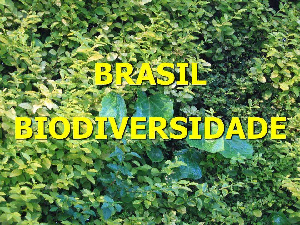 BRASILBIODIVERSIDADE