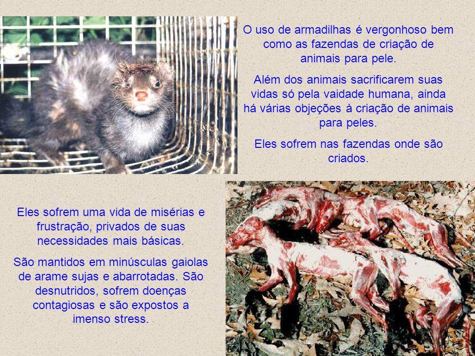 O uso de armadilhas é vergonhoso bem como as fazendas de criação de animais para pele.