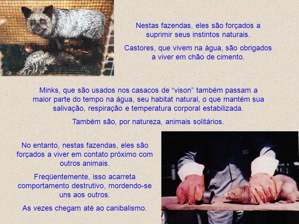 O uso de armadilhas é vergonhoso bem como as fazendas de criação de animais para pele. Além dos animais sacrificarem suas vidas só pela vaidade humana