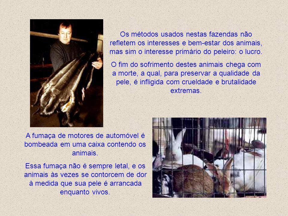 Os métodos usados nestas fazendas não refletem os interesses e bem-estar dos animais, mas sim o interesse primário do peleiro: o lucro.